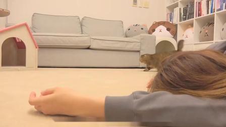 实验:主人晕倒,猫咪有何反应?看完泪目了!