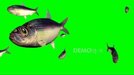 歌曲配乐 c395神奇的鱼海洋海底鱼群游动鱼类特写绿屏抠像背景AE PR会声会影视频制作后期合成素材歌舞表演节目节日LED大屏幕舞台 背景视频
