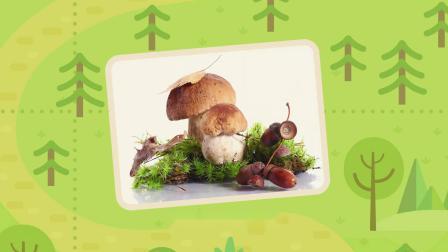 瑞奇宝宝:宝宝们要去采蘑菇了,它们碰到了很多蘑菇,赶紧去采吧!