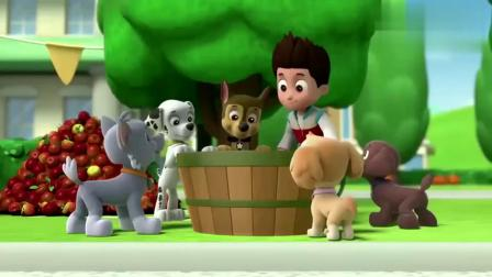 汪汪队立大功:莱德和狗狗们要来一场PK,将南瓜滚进谷仓