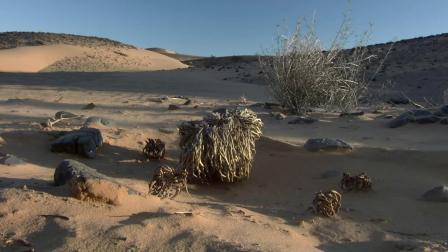 撒哈拉沙漠[1080P]