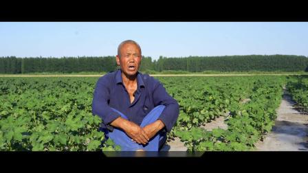 2020.6乌苏市兴农农业宣传片