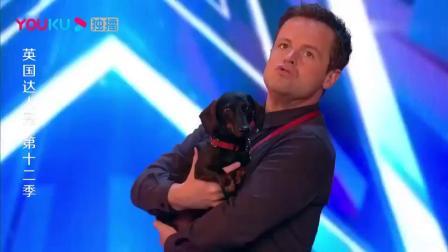 英国达人秀:选手带猫,评委们不屑,当开始表演后全场沸腾了!