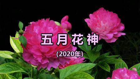 五月花神(2020年)