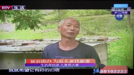 BTV生活 蓝孔雀