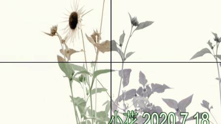 2020.7.18.小花