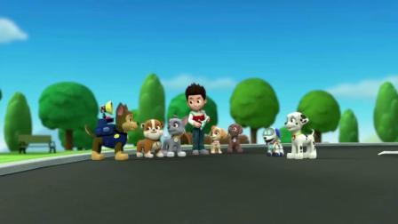 汪汪队立大功:狗狗们有了新朋友,是莱德的电子狗