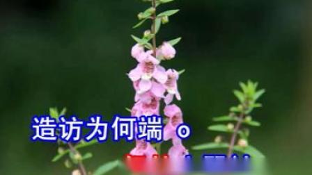 访陆游(杨凯帆潘千芊)演唱