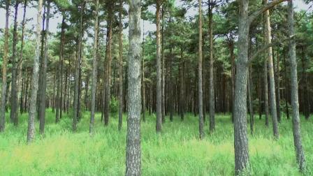 钢琴曲《寂静的森林》