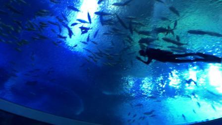 珠海长隆海底隧道