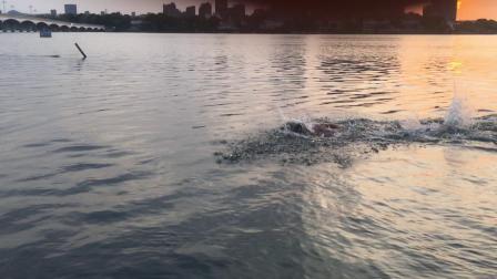 百家湖游泳1