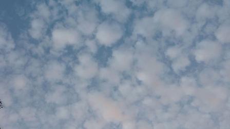 无人机航拍图片:吴淞炮台湾湿地森林国家公园