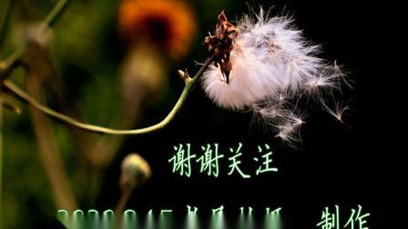 2020.8.15.津门水上公园夜景