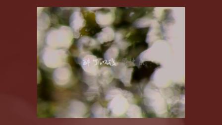 鹿先森乐队《第一次看见你时我就看见了我的衰老》歌词版MV