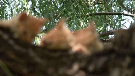 树上的猫咪 -在玉渊潭-2020,08,25.
