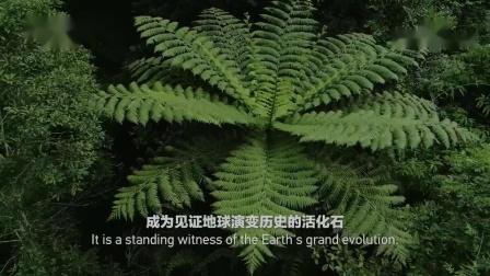 《美丽中国自然》尖峰岭系列植物活化石