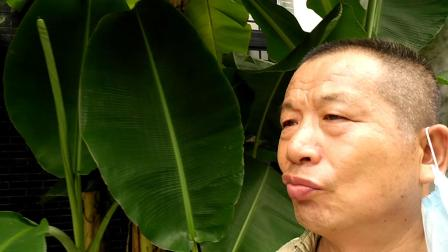 香蕉好吃0918_鲲鹏展翅