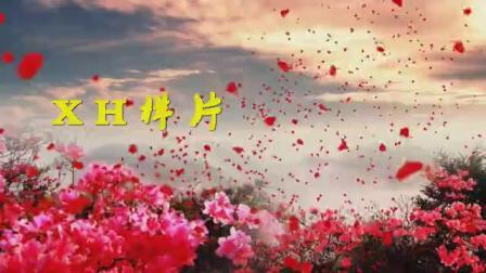 B672古筝伴奏山丹丹映山红花海民族歌曲舞蹈配乐成品led大屏幕背景视频素材