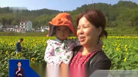 国庆假期第二天:安徽黄山 古村迎客来 龙腾花海醉游人