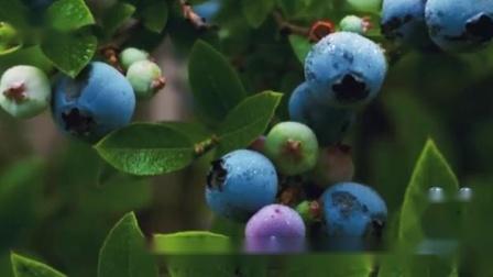乐佳善优蓝莓叶黄素酯凝胶糖果,让眼睛远离蓝光伤害