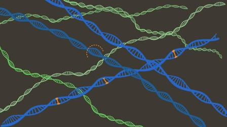 What are polygenic risk scores_