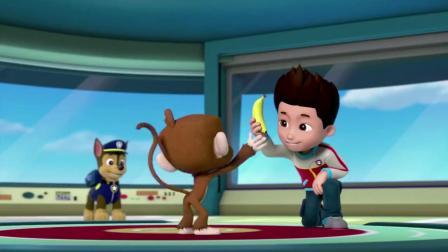 汪汪队立大功:为了吃到香蕉蛋糕,大家纷纷学猴子叫