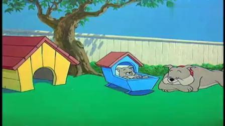 猫和老鼠:汤姆真是可怜,被杰瑞耍的团团转,还被狗爸爸当成敌人(1)