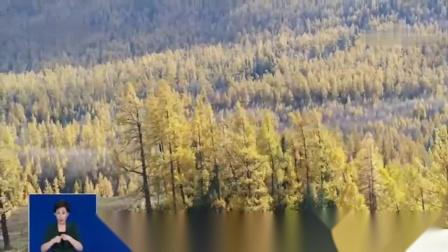 新疆喀纳斯 打翻调色盘 喀纳斯呈现晚秋绝美画面