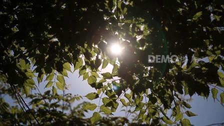 歌曲配乐  a553 唯美梦幻小清新绿叶阳光森林树叶光晕镜头树林夏天来了空镜头绿色环保公益保护大自然学校大学诗歌朗诵比赛大屏幕舞台LED视频素材 大屏素材