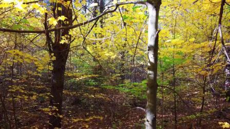 又是唯美深秋时分