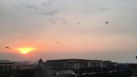 日落时分,天安门广场上空的北京雨燕