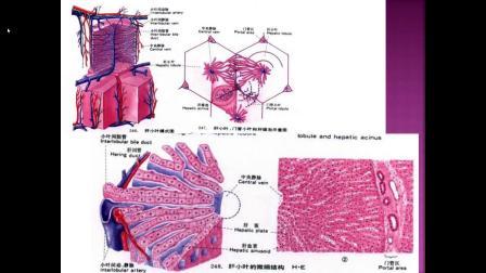 肝脏灌注异常的影像征象解读