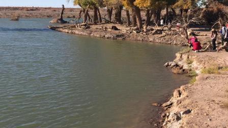 内蒙古阿拉善盟额济纳旗黑水城景区的弱水胡杨林1