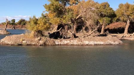 内蒙古阿拉善盟额济纳旗黑水城景区的弱水胡杨林2