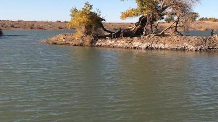 内蒙古阿拉善盟额济纳旗黑水城景区的弱水胡杨林3