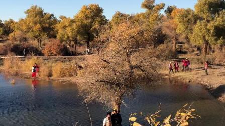 内蒙古阿拉善盟额济纳旗黑水城景区的弱水胡杨林10
