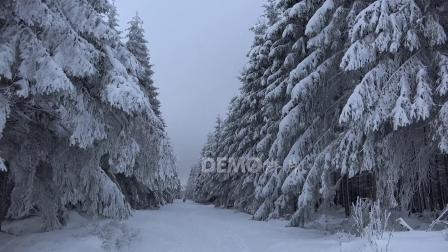 歌曲配乐 a865 2K画质雪景冬天雪松雪林雪地冬季下雪高清风景视频素材背景led雪山雪景冰天雪地云雾山川河流 大屏素材