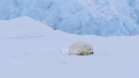 歌曲配乐 a886 超酷白雪皑皑冰川冰天雪地北极洲北极熊实拍视频素材 大屏素材