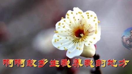 在那桃花盛开的地方★钢琴更好听辛更KTV制作分享