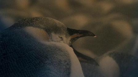 《帝企鹅日记》这才叫演技,你看懂了吗(3)