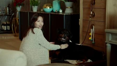 宠爱:这是养了一只狗,还是找了一个情敌,陈伟霆表示太难了!