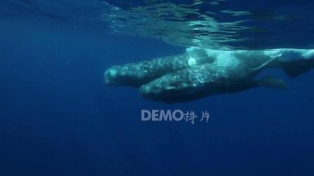 歌曲配乐 a892 超酷蓝色海洋海水海底世界海豚鲸鱼游动梦幻酒吧夜店咖啡馆静吧大屏幕舞台LED背景视频素材 大屏素材
