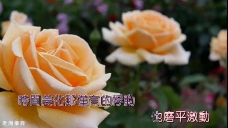 张碧晨《红玫瑰》& 玫瑰花