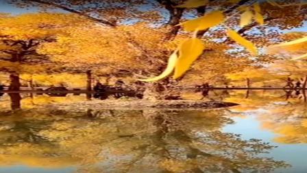 金色胡杨的哈哈镜-音乐:天边