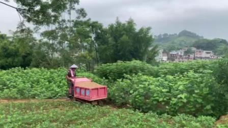 山区搬运车,农业运输