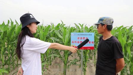 科尔沁左翼后旗玉米回访效果展示