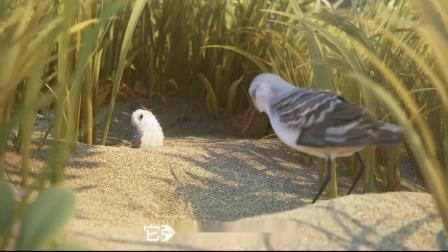 奥斯卡最佳动画《鹬》一个关于母爱,成长,勇气的故事
