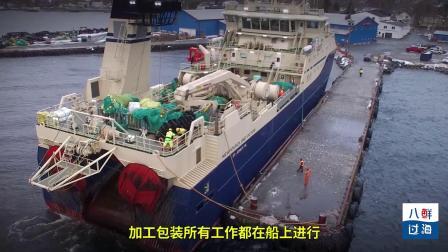 加拿大北极虾:最安全的进口海鲜