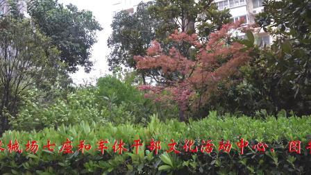 """西安市碑林区红缨花园小区《""""微型森林""""欣赏》"""