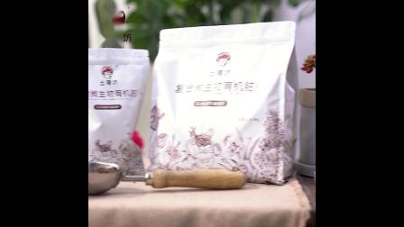 樱桃树苗怎么种植方法